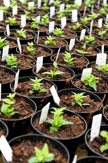 plantenetiketten